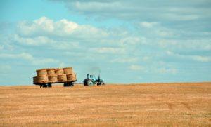 trabalhador rural. empregado rural. trabalho rural.