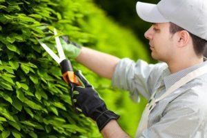 empregado doméstico. empregada doméstica. empregada doméstica direitos. jardineiro.